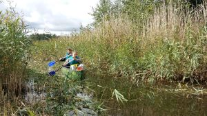 Lauri Orava och Aaro Tullo paddlar i en vassrugg.