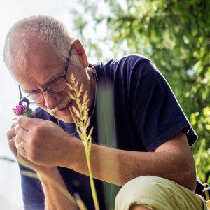 Tuomo Kuitunen tutkii luupilla metsäapilaa.