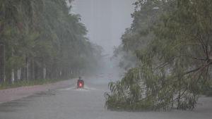 Träd har fallit på vägen i skyfall i Manila.