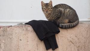 Kissa istuu aidalla mustan kaavun vieressä