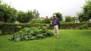 En äldre man med keps står vid en rabatt på en gräsmatta.