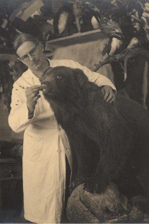 Svartvitt foto: man i vit rock arbetar på att stoppa upp en björn.