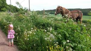 Freja Colérus, blommor och en häst.