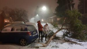 Två personer står bredvid en bil och ser på en trädgren som nästan blåste över bilen.