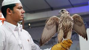 Mies pitelee haukkaa Dohan haukkamessuilla.