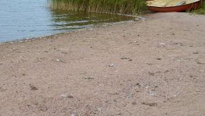 Fågelavföring och vita dun på en badstrand.