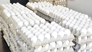 Kananmunia koteloissa.