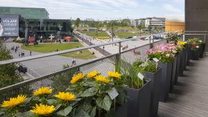 Foto på Kalle Hamm och Dzamil Kamanger verk Immigrant Garden. Blommor på Kiasmas balkong.