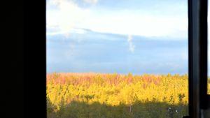 Utsikt över skogslandskap från fönster i fjärde våningen på fyrans fabrik på Fermions fabriksområde i Hangö.