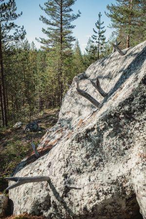Kivi johon kiinnitettynä sarvia