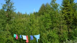 Grönskande träd och buskar, i förgrunden en lina med tvätt på tork och i bakgrunden rotorbladet från ett vindkraftverk.