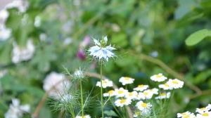 Blommor i Fredrikas trädgård i Borgå.