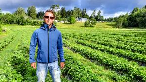 En man iklädd blå jacka står mitt i ett jordgubbsland.