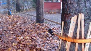 trapetsiliina temppuiluun ja tasapainoiluun kahden puun välissä