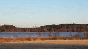 Läppträsket i Karis med några svanar på sjön.