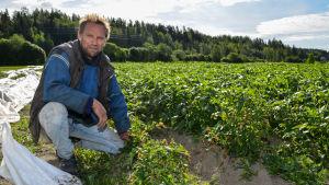 Odlaren Christer Lindqvist i potatislandet