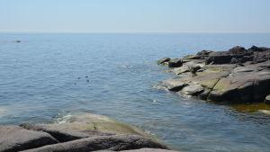 Havsklippor i soligt väder, sjöfåglar simmar i havet.