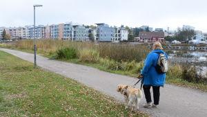 Synskadad med ledarhund på promenad.