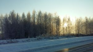 En isig väg med snövallar en kall vinterdag då solen skiner mellan träden.