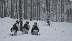 Tre beväringar under en skogsövning i Galoppskogen i Raseborg.