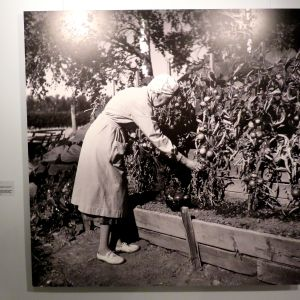 Aino Sibelius i trädgården på Ainola