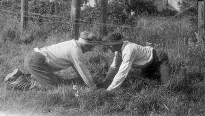 """Två män leker leken """"Dra pissmyra"""". Bilden är tagen 1930 i Bromarf."""
