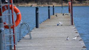 Några fåglar på en brygga.