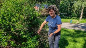 En kvinna står och rensar döda kvistar i en buske.
