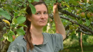 Tuija Kuoppamäki står under ett äppelträd.