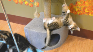 En kattunge hänger upp och ner i en leksak som är fäst i en liten klätterställning.