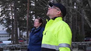 Janne Backas och Elina Lycke skådar upp mot granens topp.