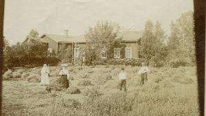 Två kvinnor och två män räfsar hö utanför ett boningshus. 1800-1920-tal.