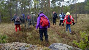 Deltagarna i Sibbo kommuns skogsterapi går över en myr.