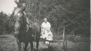 Slåtter med häst i Granvik, Pargas.