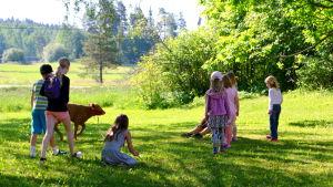 Barn och kalv på gräsmatta