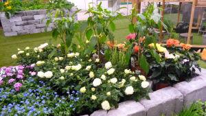 Blomrabatt på trädgårdsmässa