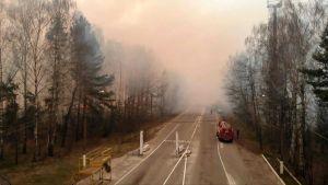 Skogsbränder nära tjernobyl