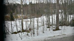 vinterlandskap där ett djur som kan vara en varg syns långt borta i mitten