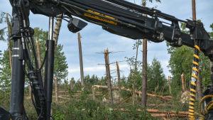 Harvester och stormskadade träd