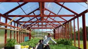 Mats Nyman inne i ett stort luftigt växthus. Växthuset är byggt av träbalkar som är målade med rödmylla. På borden finns många gröna plantor, bland annat pumpa