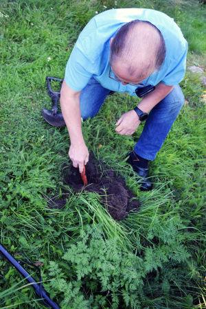 En man letar med en så kallad pointer efter metallföremål i en grop i en gräsmatta.