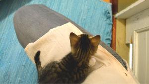 Kattunge ligger på ben