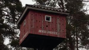 """En väldigt stor rödmålad holk med många hål för fåglar att flyga in i. Står  """"Bird hotel"""" på huset som är högt upp i ett träd."""