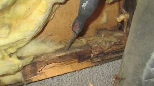 Pahasti vaurioitunut runkopuu.