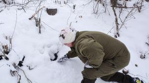 Christian Linden i snön tittar på något som kan vara utterns bohåla