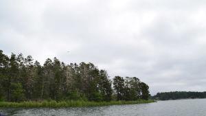 En bild på en ö i skärgården. Det finns gott om träd på ön och den omgivs med havsvatten.