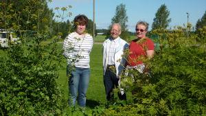 Monika Nyman, Nisse Kevon och Elisabeth Åberg vid örtagården på Gammelgården i Ingå.