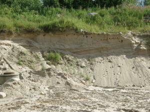 Backsvalors koloni i sandbank, En del av bona förstörda. Sannäs i Karis.