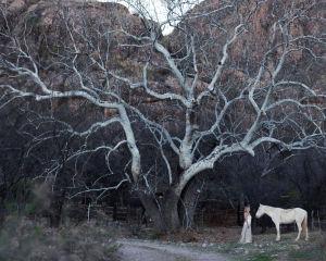Nainen ja Hevonen seisovat vaaleaoksaisen puun alla