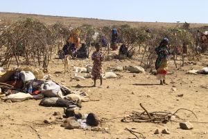 klimatflyktingar i somaliland